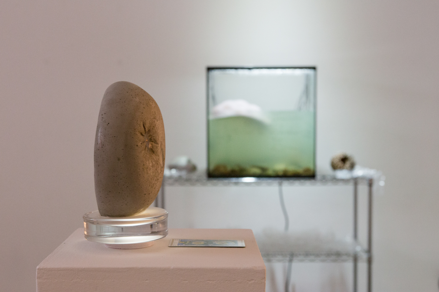 Paul Esposito's solo show sculpture in the foreground, with an aquarium tank in the background.